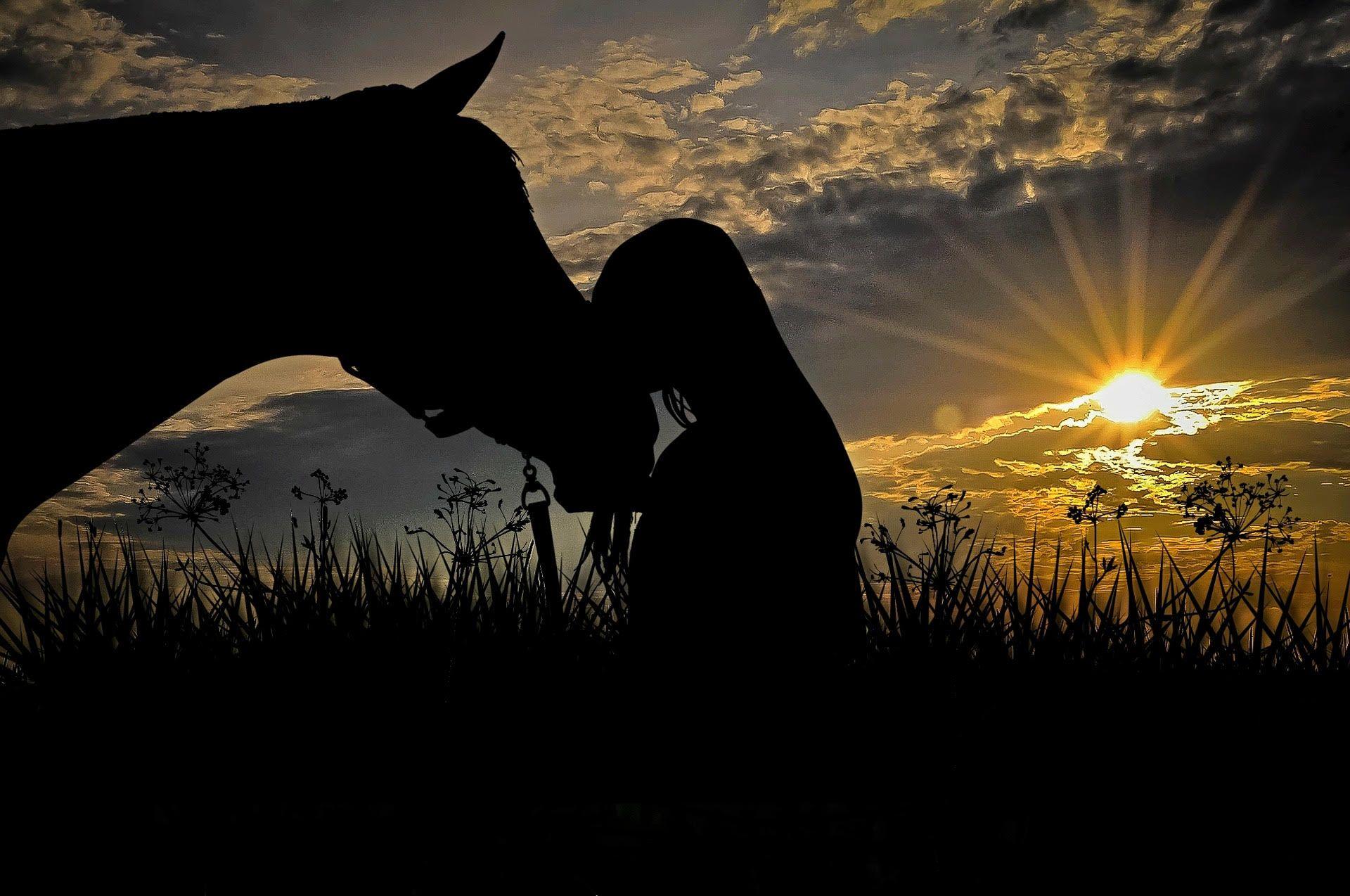 Di Snow - Equine Horse Naturopathy